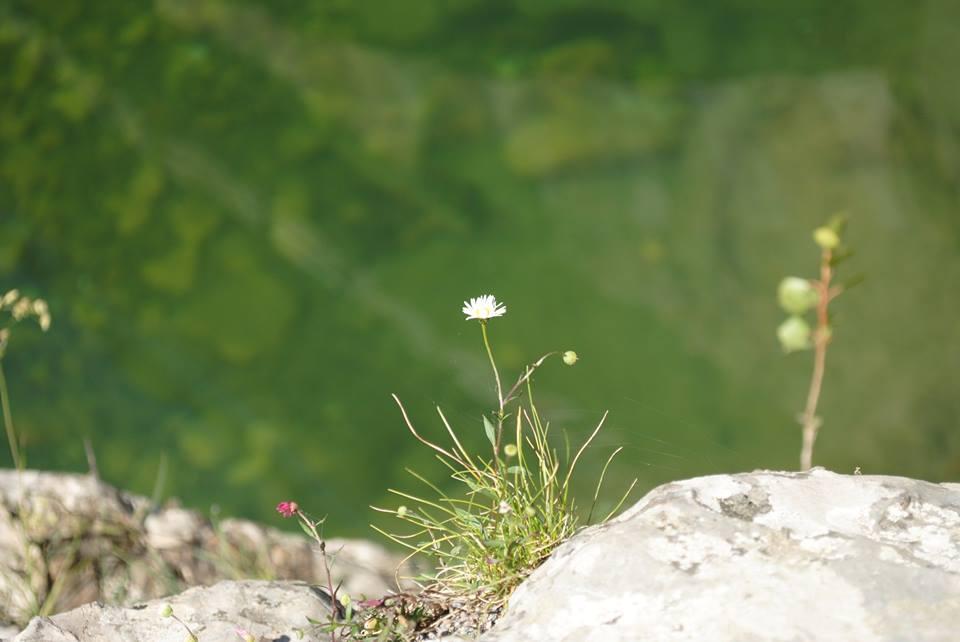 La consciencia zen